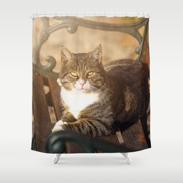 Cute cat relaxing in the sun on old bench Shower Curtain