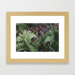 Ferns intertwine Framed Art Print