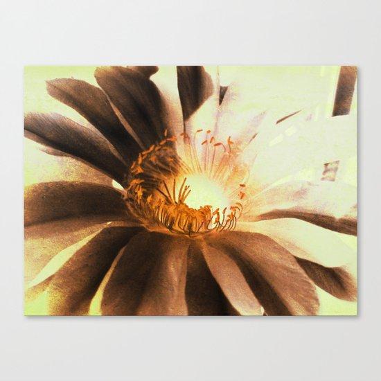 Kaktus Flower Canvas Print