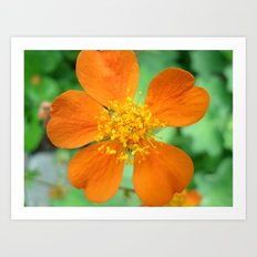 Orange Flower Photography Art Print