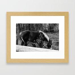 Horse (B&W // Black & White) Framed Art Print