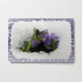 Two purple pansies Metal Print