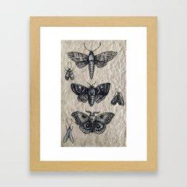Moth studies Framed Art Print