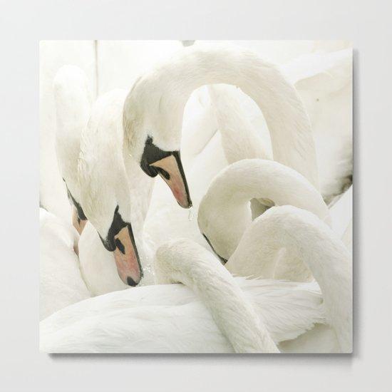 white beauties Metal Print