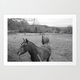 horsemud Art Print