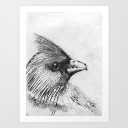 Cardinal Drypoint Art Print