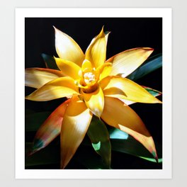 Yellow Bromeliad (2019), a Society6 exclusive Art Print