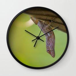 Puerto Rican Lizard Wall Clock