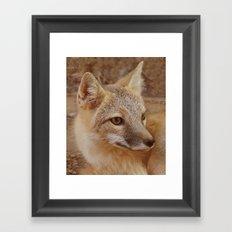 Fox II Framed Art Print