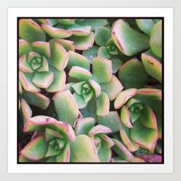 Dana Point Succulent 5 Art Print