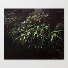Botaical Garden Canvas Print
