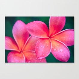 Aloha Hawaii Kalama O Nei Pink Tropical Plumeria Canvas Print