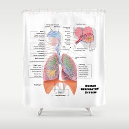 Human Respiratory System Diagram Shower Curtain