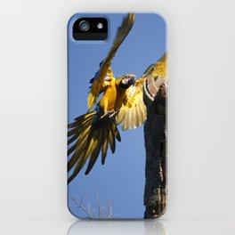Birds from Pantanal Arara Canindé iPhone Case