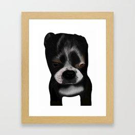 It Wasn't Me - Boston Terrier Puppy Framed Art Print