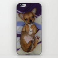 chihuahua iPhone & iPod Skins featuring chihuahua by Lab&co