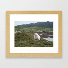 The prettiest sheep Framed Art Print