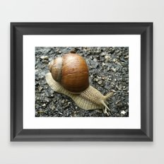 Snail Photography Framed Art Print