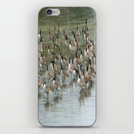 Canada Geese Partial Frozen Lake iPhone Skin