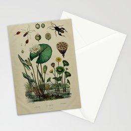Flower nenuphar (Fr)1 Stationery Cards