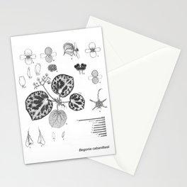 Begonia cabanillasii by Yu Pin Ang Stationery Cards