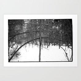 NORWEGIAN FOREST III Art Print
