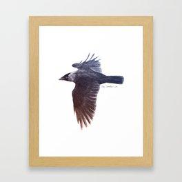 Jackdaw Framed Art Print