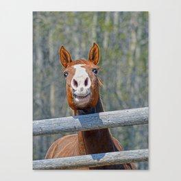 Horse Humour Canvas Print