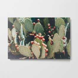 Cactus Fruit Metal Print