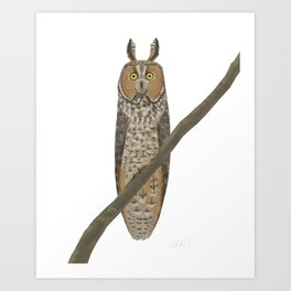 Long-eared Owl Art Print