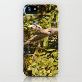 Indian grey hornbill taking flight. iPhone Case