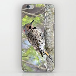 Northern Flicker Showing His Colors iPhone Skin