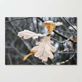 Oak Leaf. Canvas Print