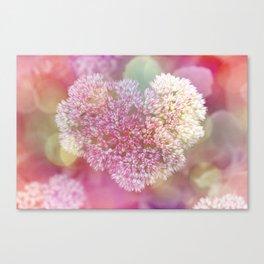 Sedum - Succulents  Canvas Print