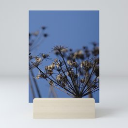 Cow Parsley Seedhead Against a Blue Sky Mini Art Print