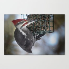 December Pileated and Suet Feeder Canvas Print
