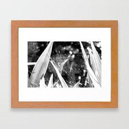 spider's web Framed Art Print