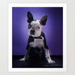 Super Pets Series 1 - Super Bugsy Art Print