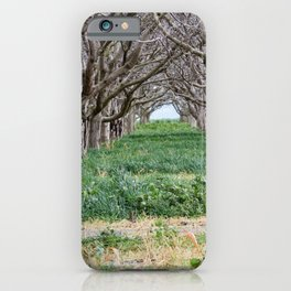 Nature - Crow's Landing Trees 2 iPhone Case