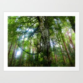 Grandmother Tree Art Print