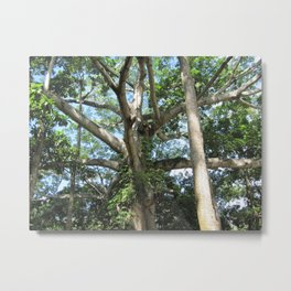 Honduras Tree Metal Print