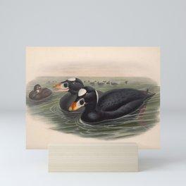 030 Surf Scoter oidemia perspicillata4 Mini Art Print