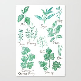 green herbs family watercolor Canvas Print