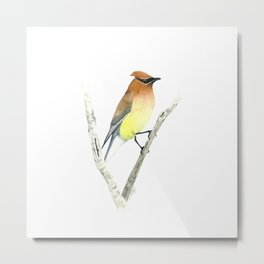 Cedar Waxwing in Watercolor Metal Print