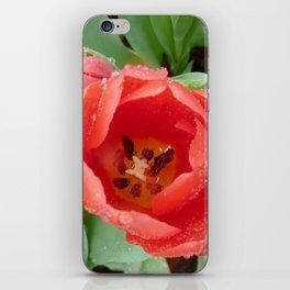 Flower - Tulip iPhone Skin
