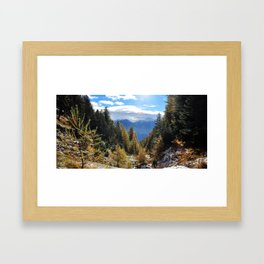 Firs And Larches Framed Art Print