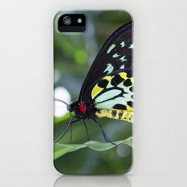 Cairns Birdwing Butterfly iPhone Case