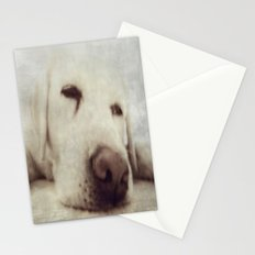 Pooch Stationery Cards