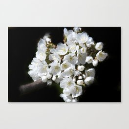 blossoms on black background -04- Canvas Print