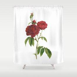 Vintage Red Rose [02] Shower Curtain